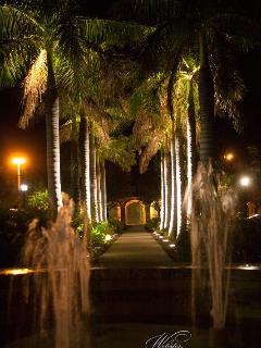 A palm lined walk is a romantic sight in Frederiksted