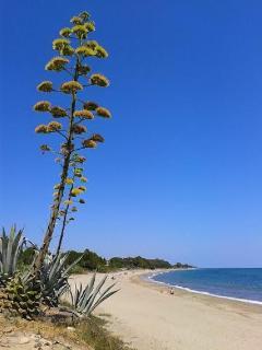 La Costa Verde = longue étendue de plage de sable fin