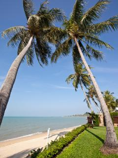 Koh Samui being renowned of coconut trees