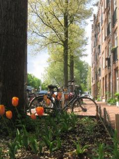 Streetview with Tulips