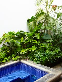Tropical Garden with Basil, Mint, Rosemary and Beautiful Plants
