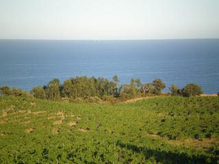 our vineyard and the sea