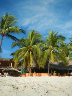 Green Palms, blue sky on La Ropa Beach
