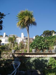 View up to the cliff garden from the cottage..