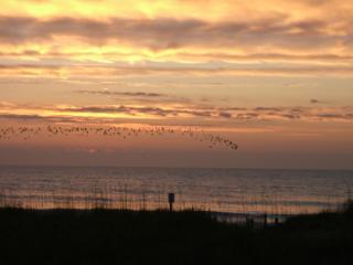 Ocean Front Beach Rental Two Units Sleeps 10 or 20, Carolina Beach