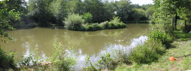 Our Coarse lake - pristine Carp and tench fishing in a peaceful location