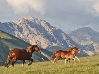 Wild horses of Campo Imperatore