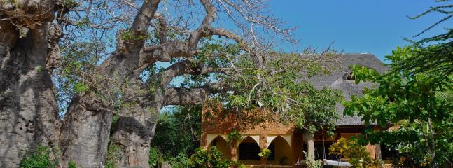 Baobab House under baobab trees