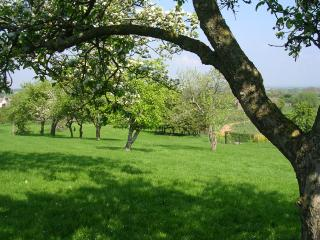 A view across the field and orchard at Woodcroft.