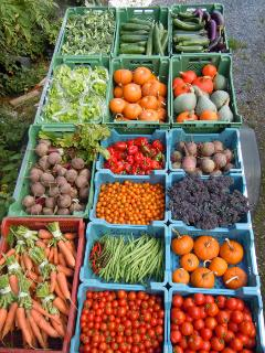 some of our summer vegetables