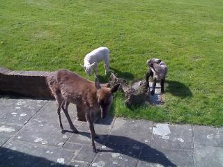 Some of the residents