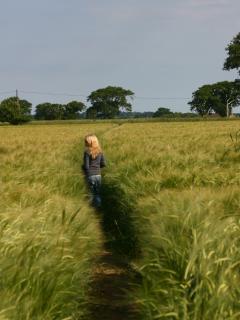 paths across the fields