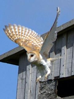 Loads of wildlife all year round to look out for; owls, red squirrels, curlew, swallows, swifts,....