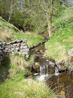 Stream behind the cottage