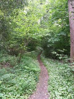 Local woodland walks by the river