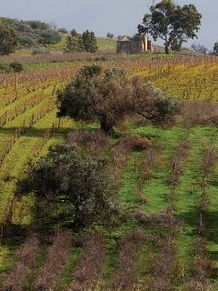 Countryside in Sicily