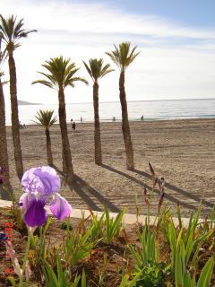 Benidorm;s beach with palm trees