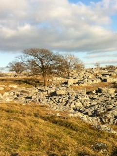 Farleton Knott limestone paving, Nature Reserve