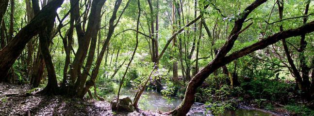 Explore the amazing creek