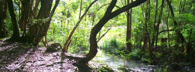 Amazing creek