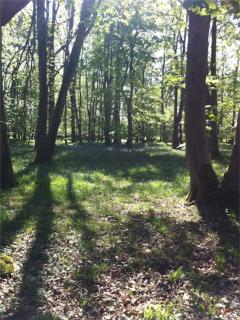 Ancient woodland at Curwen Woods