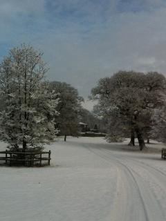 Curwen Woods park in the snow