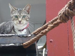 Boebie, the captain on board.But no litter box on board.