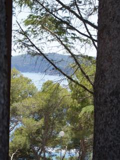 views of the bay through mature trees by the pool
