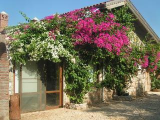 The Cottage, Sogut