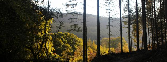 Views from one of the Hafod trails
