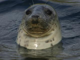 Enjoy the perfect location for holidaying and seal watching - even from within the caravan