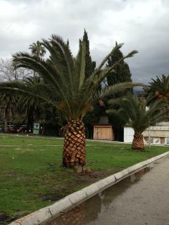 Palm Trees in Igalo