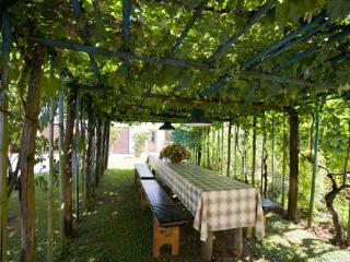 table and benches under the arbor of vines