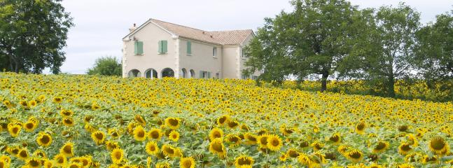 Surrounded by sunflowers....