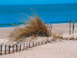 beaches of St. Marie de la Mer near Arles