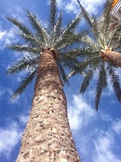 PALMS ON THE PASEO