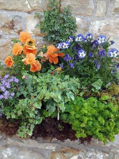 Cottage window box.