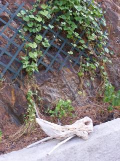 An 'elephant skull' - Driftwood Art in the garden & patio