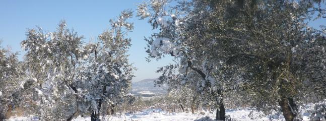 oliveta con neve