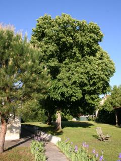 The lime Trees - relax on the private terrace of the cottage