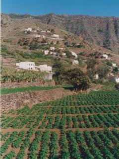 Valle de Hermigua, cultivos y panorámica