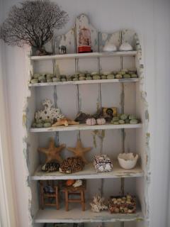 Cabinet of seaside curiosities