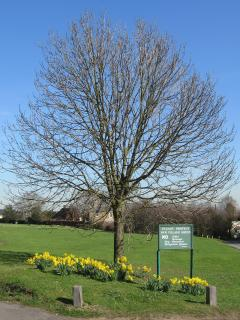 Rodmersham village green