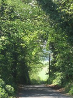 Local country lane