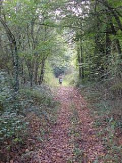 woodland walks and trail ways surrounding the house
