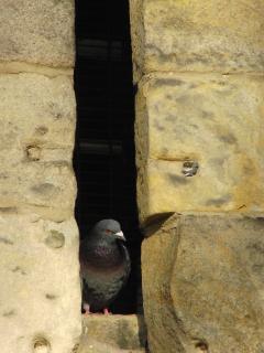 A Castle gatekeeper