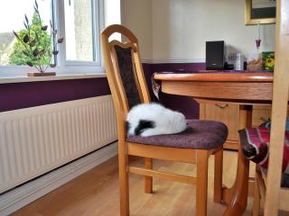 Milo (The Cat) in dining room.