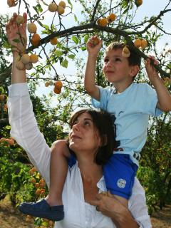 Fruit picking in our orchard