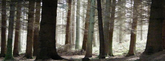 Enchanting Woodland Walks