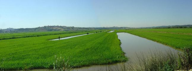 Rice fields at 1km - trekking / birds watching